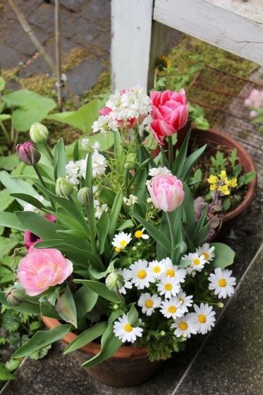 玄関の鉢植え_b0132338_12545852.jpeg