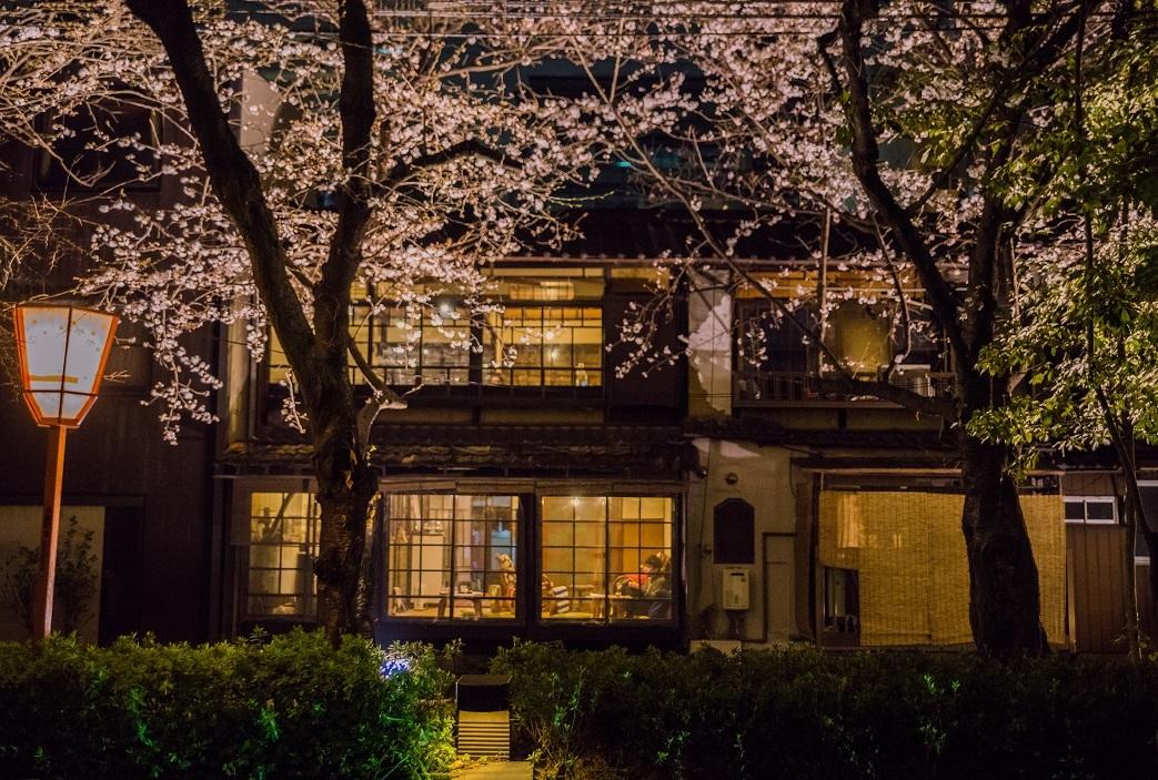 2019京都桜~高瀬川沿いから_e0363038_12521844.jpg