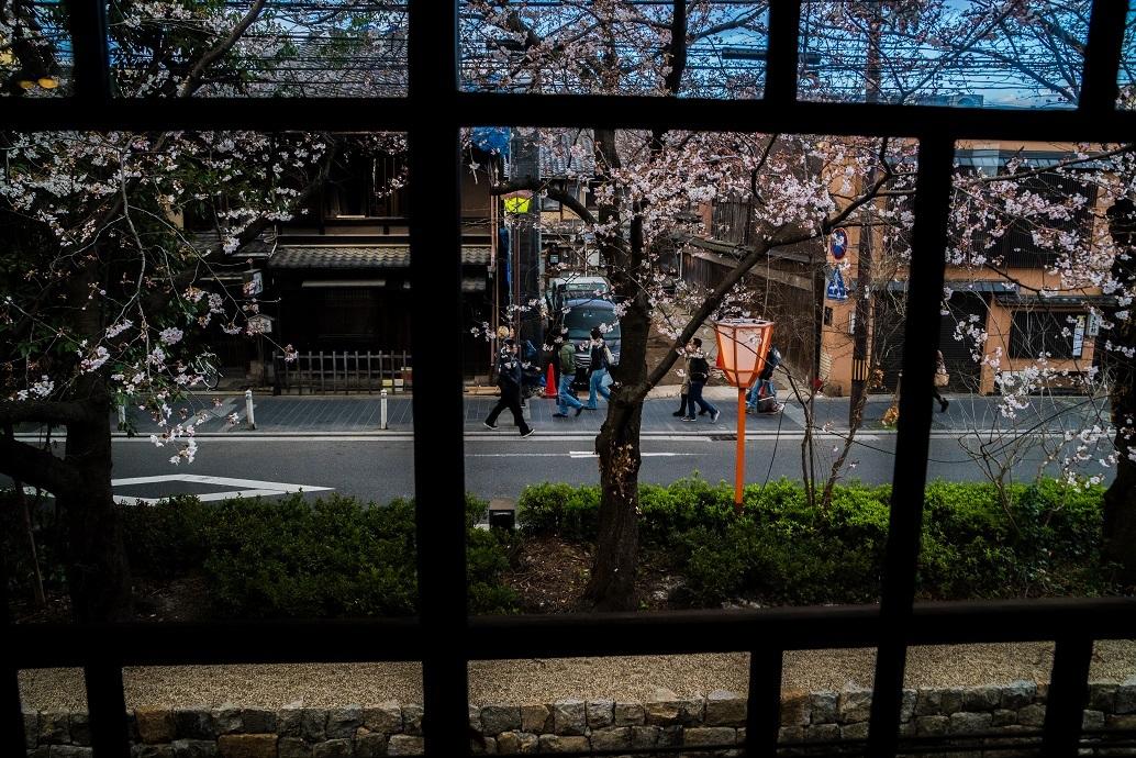 2019京都桜~高瀬川沿いから_e0363038_12523134.jpg