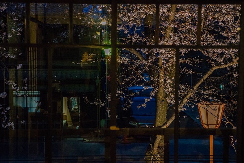 2019京都桜~高瀬川沿いから_e0363038_12525281.jpg