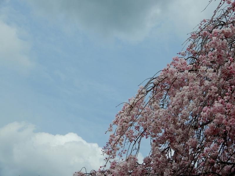 お花見で見るもの * flower viewing or people viewing_f0374041_05281193.jpg