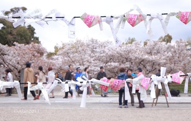 京都 遅咲きのおむろ桜 in 仁和寺(にんなじ)_e0227942_15164307.jpg
