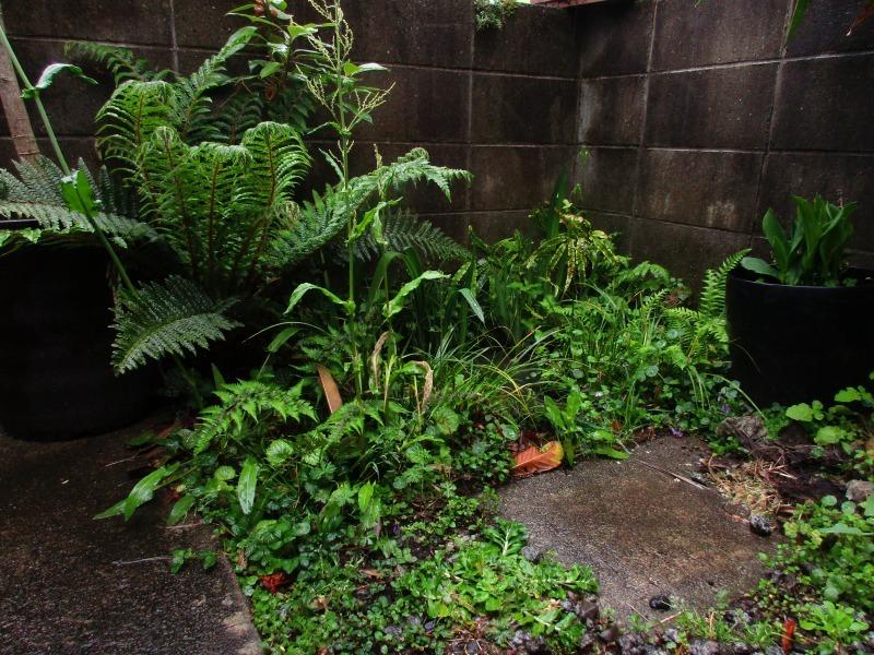 植物「雨の日」_b0362459_16595534.jpg