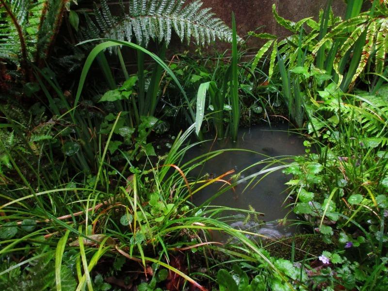 植物「雨の日」_b0362459_17010635.jpg