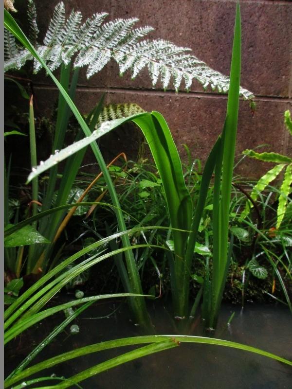 植物「雨の日」_b0362459_17022004.jpg