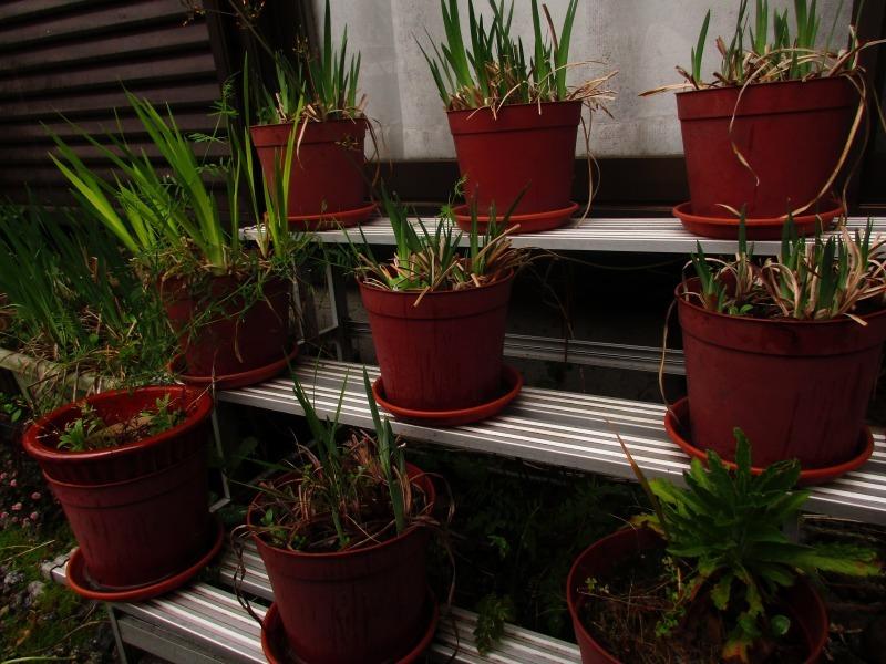 植物「雨の日」_b0362459_17060775.jpg