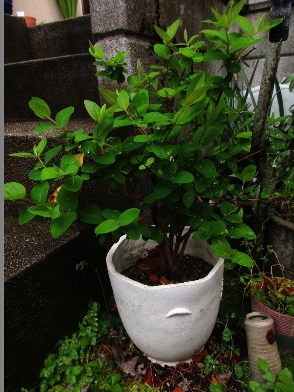 植物「雨の日」_b0362459_17115942.jpg