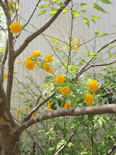 4月の庭_a0335560_22475363.jpg