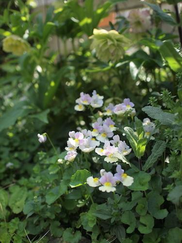 4月の庭_a0335560_22475429.jpg