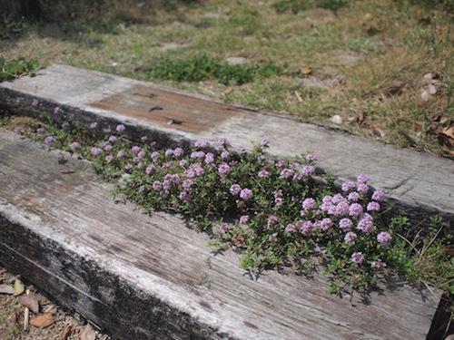 4月の庭_a0335560_22475430.jpg