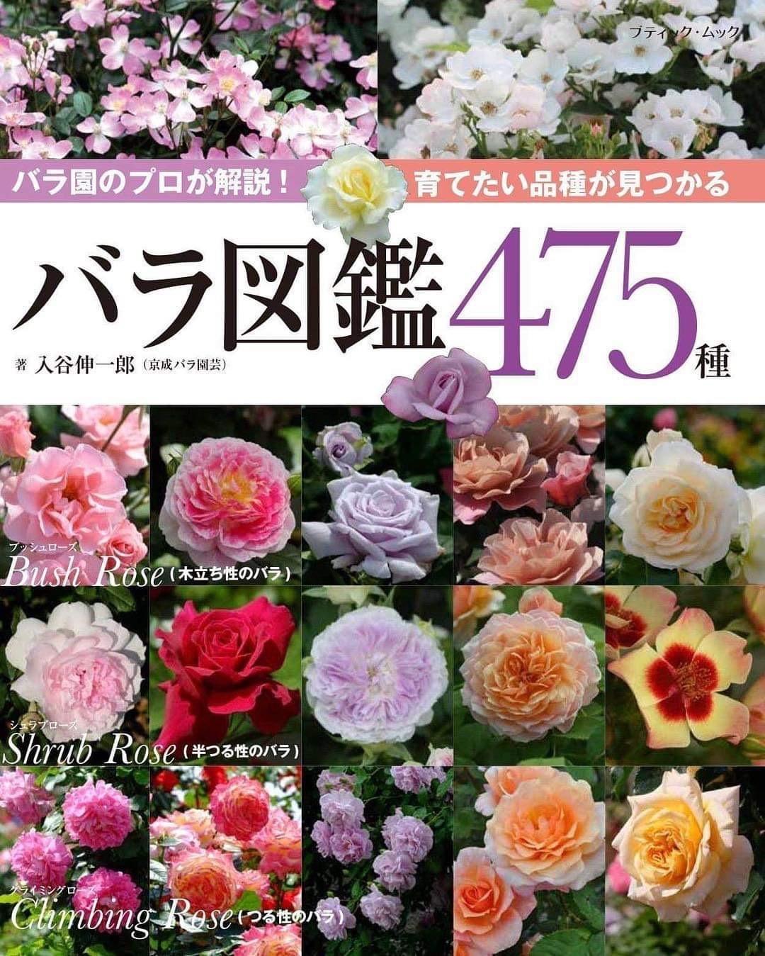 入谷さん、渾身の薔薇本、4月30日発売です_b0137969_05220847.jpeg