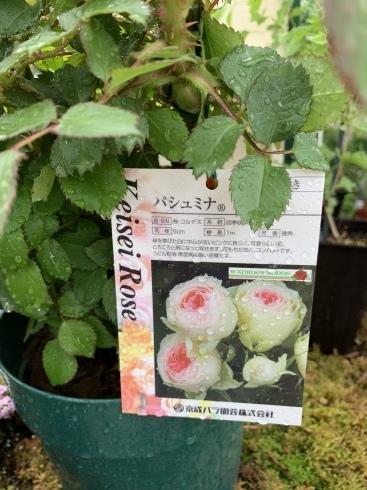 入谷さん、渾身の薔薇本、4月30日発売です_b0137969_05462215.jpeg