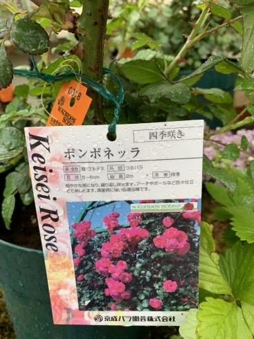入谷さん、渾身の薔薇本、4月30日発売です_b0137969_05465635.jpeg