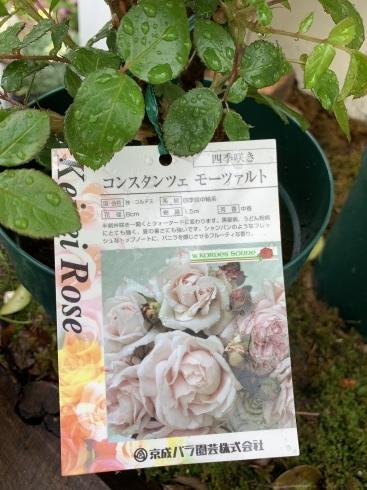 入谷さん、渾身の薔薇本、4月30日発売です_b0137969_05471212.jpeg