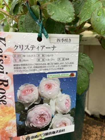入谷さん、渾身の薔薇本、4月30日発売です_b0137969_05473205.jpeg