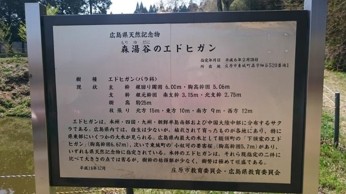 東城町の一本桜_c0325278_19040534.jpg