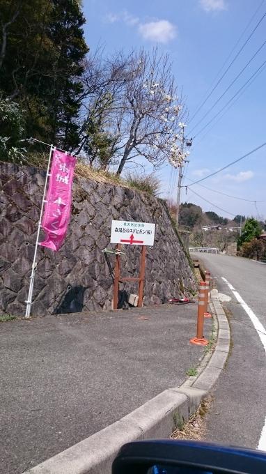 東城町の一本桜_c0325278_19044525.jpg