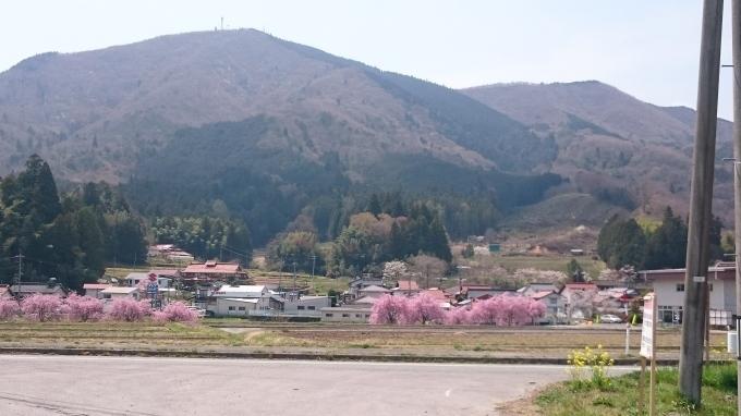 一本桜 小奴可の要害桜(おぬかのようがいザクラ)_c0325278_19194986.jpg