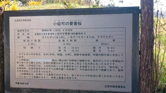 一本桜 小奴可の要害桜(おぬかのようがいザクラ)_c0325278_19330486.jpg