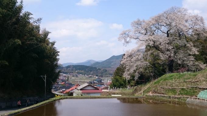 一本桜 小奴可の要害桜(おぬかのようがいザクラ)_c0325278_19384376.jpg