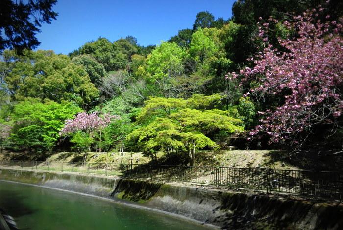 < 琵琶湖疎水 >_c0036080_1783083.jpg