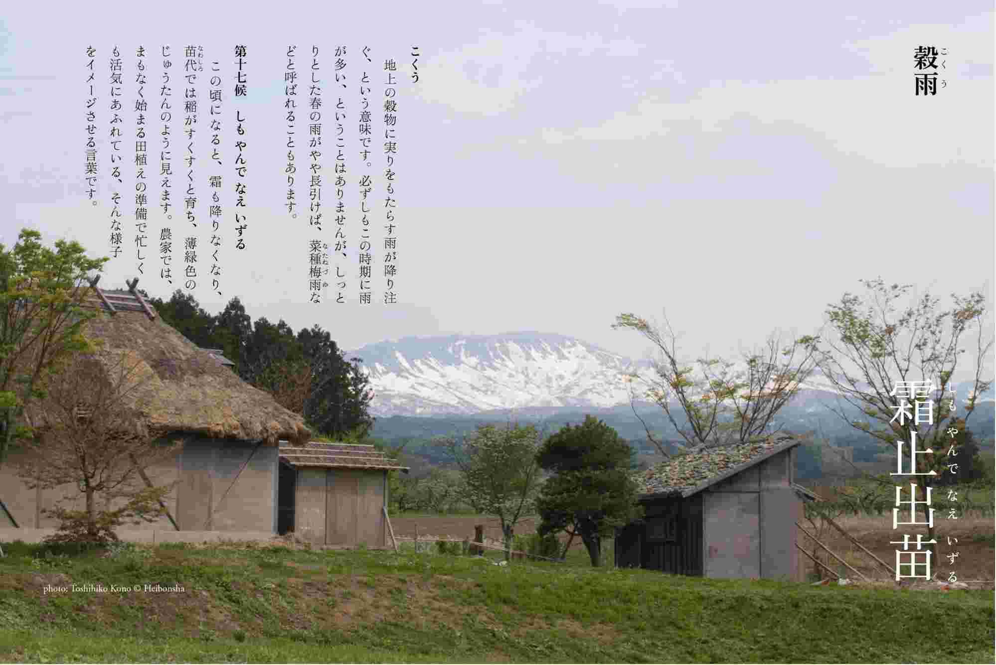 札幌にもサクラ_c0025115_22110541.jpg