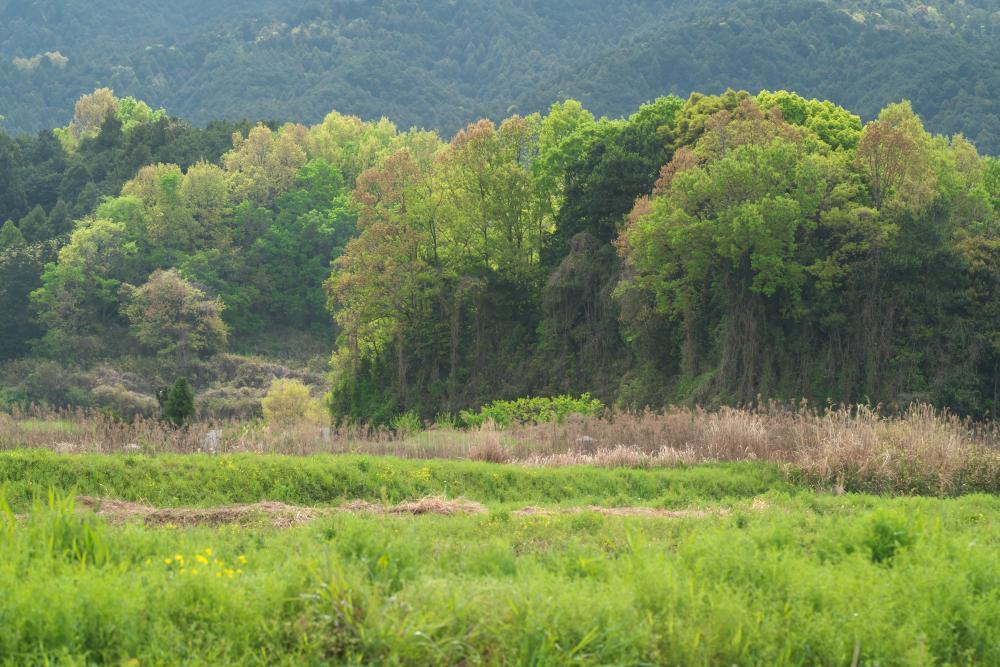 山田のレンゲ畑_b0408917_05010875.jpg