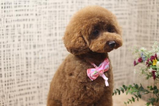 4月21日にご来店のワンちゃんです!!_b0130018_09150374.jpg