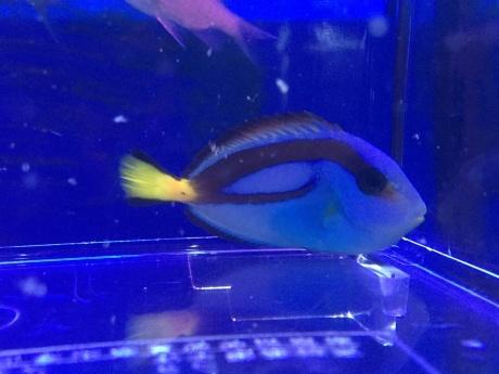 190425 熱帯魚 海水魚 金魚 めだか 水草_f0189122_13104150.jpeg