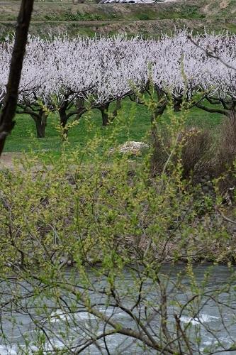 果樹園のお花見_c0299631_10092205.jpg