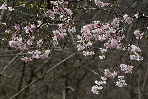 果樹園のお花見_c0299631_10092514.jpg