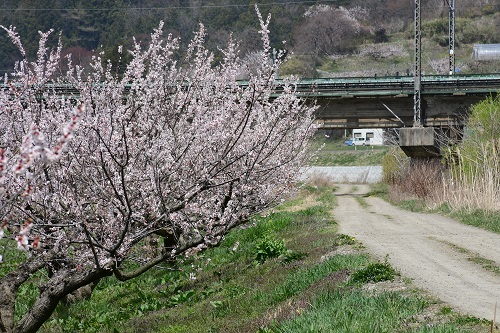 果樹園のお花見_c0299631_10093125.jpg