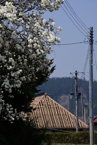 果樹園のお花見_c0299631_10093402.jpg