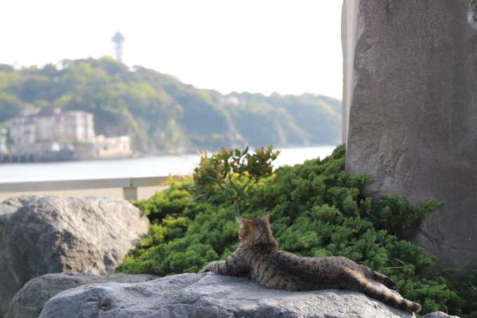 江の島散策 part 2_f0348831_21150950.jpg