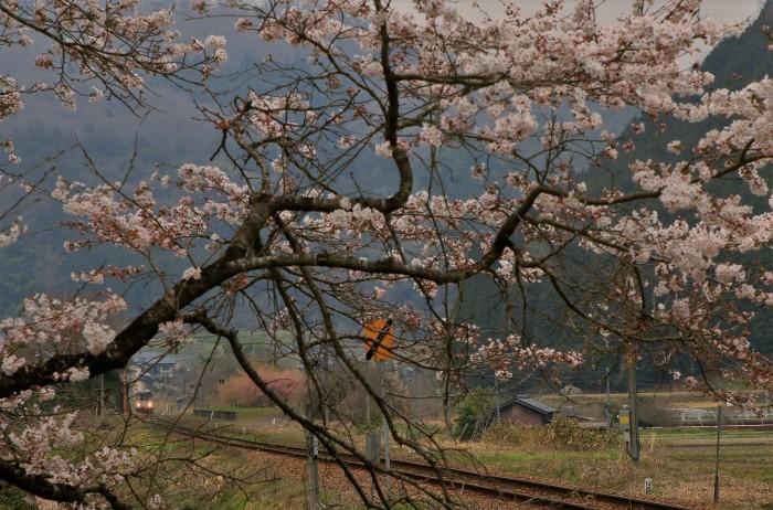 岩山駅の桜_f0371447_19425423.jpg