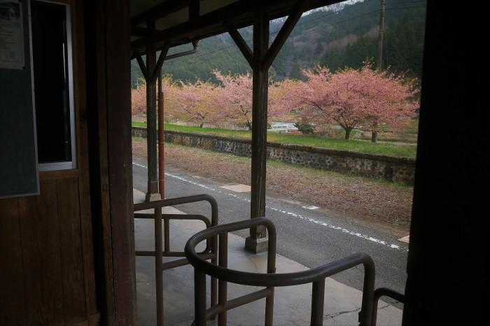 岩山駅の桜_f0371447_19432852.jpg