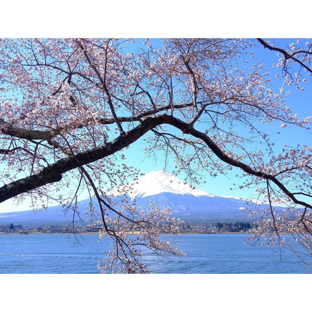 河口湖の桜_a0335867_09432446.jpeg