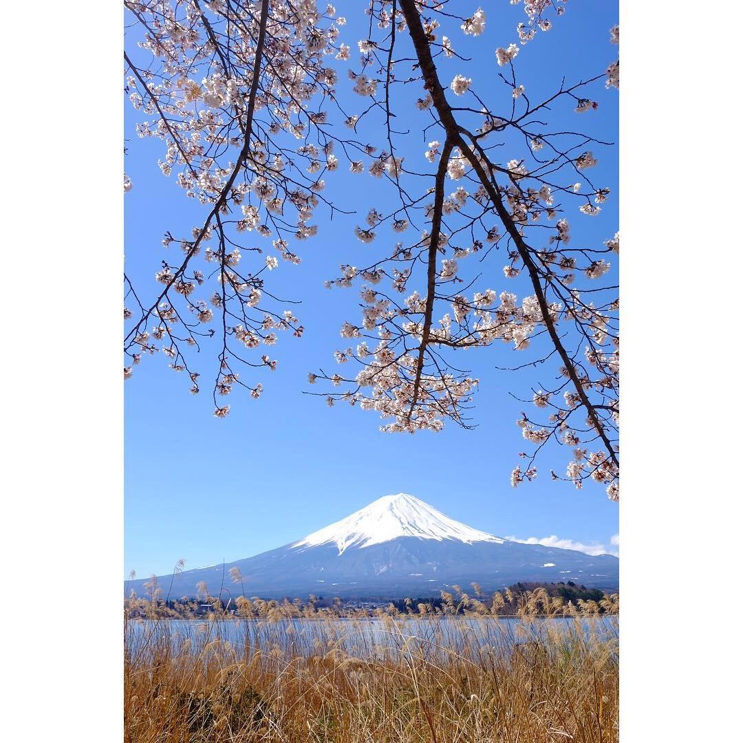 河口湖の桜_a0335867_13294922.jpeg