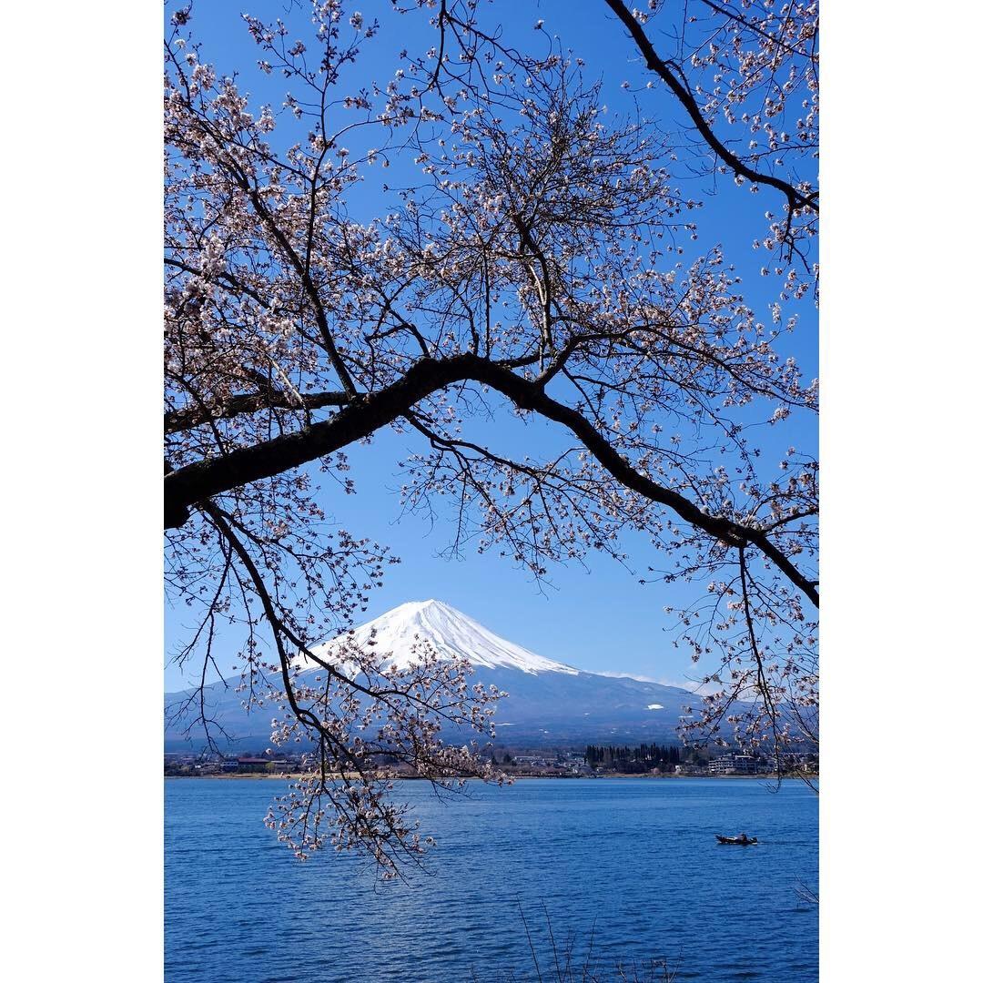 河口湖の桜_a0335867_13304375.jpeg