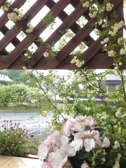 花と母の癒し & 春の花まつり・追記あり!***_e0290872_22582450.jpg