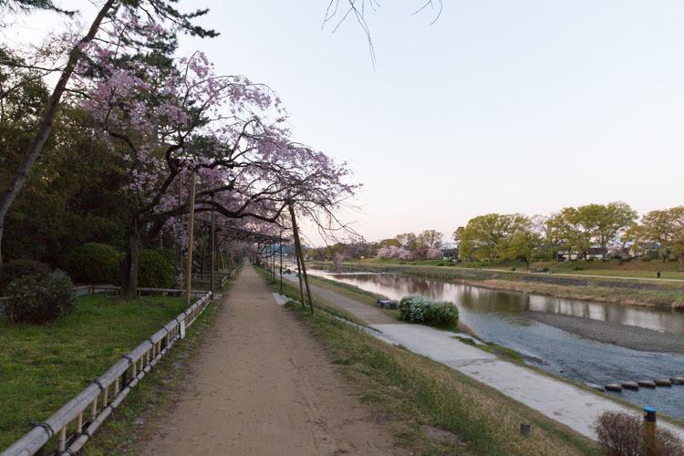 半木の道_e0051888_04302414.jpg