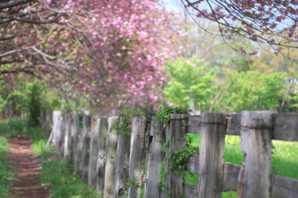 桃色に染まる牧場_d0021491_11511999.jpg
