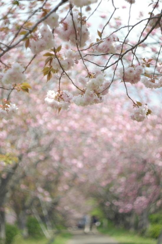 桃色に染まる牧場_d0021491_11565979.jpg