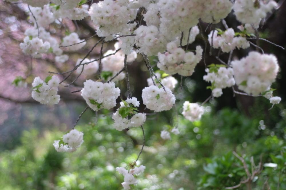 桃色に染まる牧場_d0021491_12355473.jpg