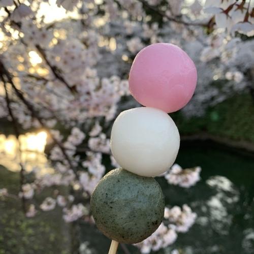桜の幹が雨に濡れて美しさ増しています 水も滴るいい桜_a0134394_06000486.jpeg