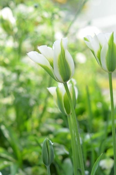 4月下旬の庭_d0025294_19225194.jpg