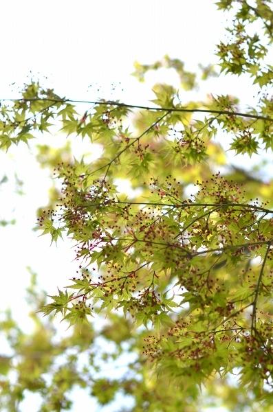 4月下旬の庭_d0025294_19231331.jpg