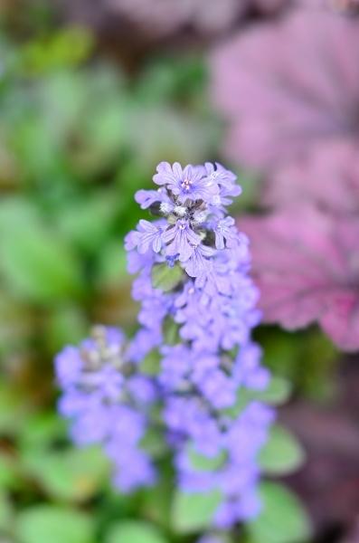 4月下旬の庭_d0025294_19235901.jpg