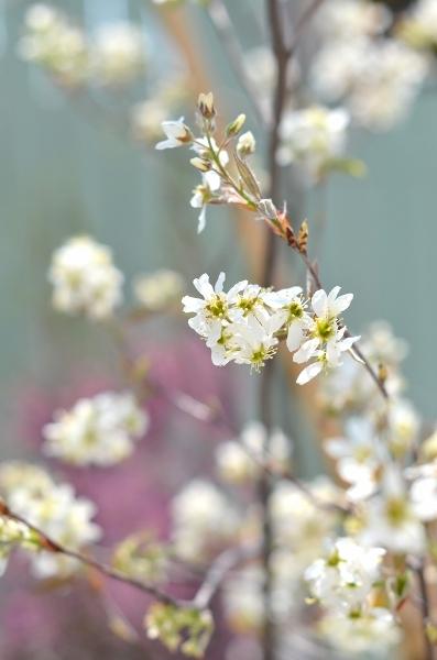 4月下旬の庭_d0025294_19245086.jpg