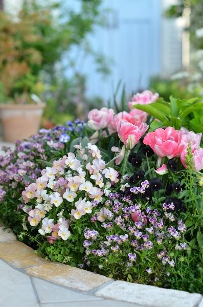 4月下旬の庭_d0025294_19253024.jpg